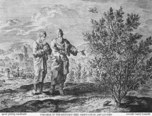 Parable of the mustard seed. Etching by Jan Luyken in the Bowyer Bible (1795), Bolton Museum, Lancashire, England.